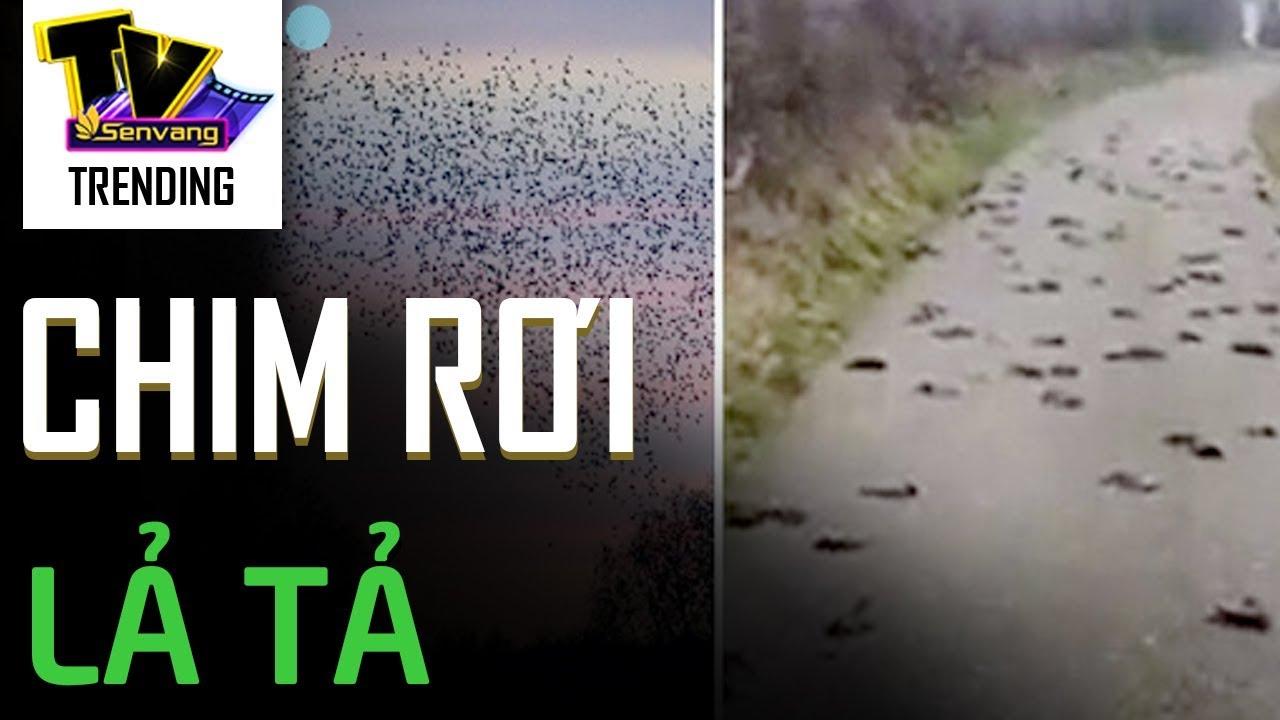 Hàng trăm con chim rơi xuống đất một cách bí ẩn, cảnh tượng như phim kinh dị