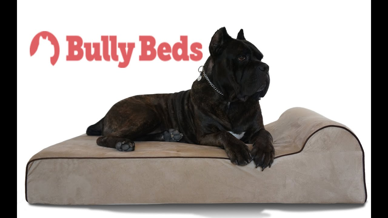 denhaus and bully beds review youtube With bully beds
