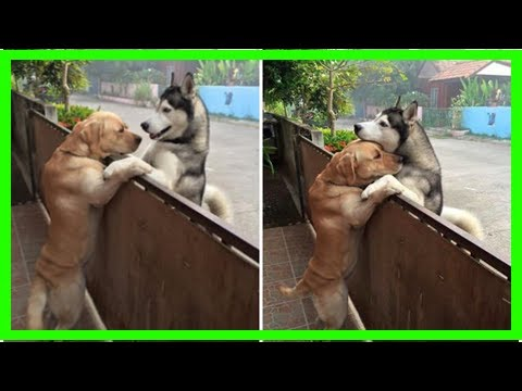 | Dog Rescue StoriesDog Escapes Yard, Runs Straight To His Best Friend For A Hug