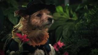 Cute Dogs star in The Wizard of Dogz