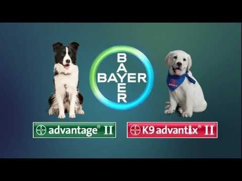 Bayer Advantage II and K9 Advantix demo video for dogs