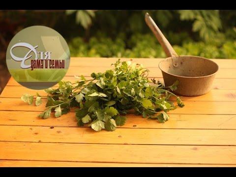 Тархун - выращивание, применение в кулинарии и полезные
