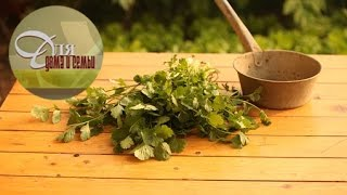 видео Базилик — описание, свойства, использование в кулинарии. Рецепты блюд с базиликом.