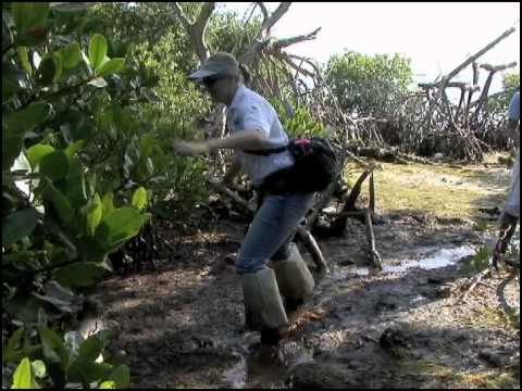 Waterways Episode 261: Mosquito Control in the Florida Keys