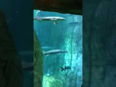 Fun times at Denver Aquarium(17)
