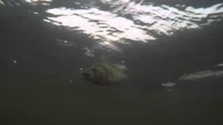 Trailer: Ultra Light Bass Fishing 2015