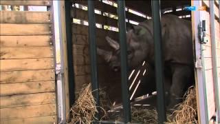 Die zwei Kolosse zum Heben | Elefant, Tiger & Co. (616) | MDR