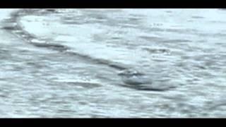 The Iceland Worm Monster (Lagarfljóts Worm) Caught on Camera[Original]