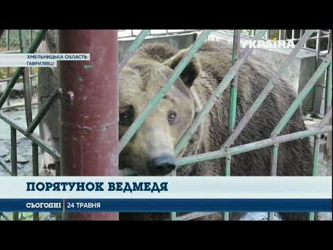 Сегодня: Зоозахисники рятують ведмедя, що живе у тісній клітці