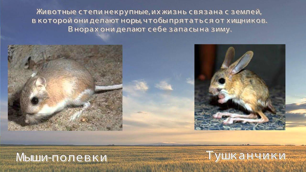 Животные и растения степи картинки 5