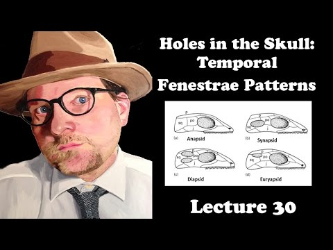Lecture 30 Holes in the Skull: Temporal Fenestrae Patterns