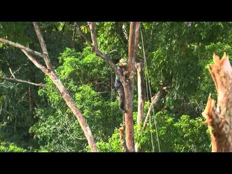 สารคดี เบื้องหลัง ถ่ายทำ การสร้างบ้านต้นไม้ของชนเผ่าปาปัว HD