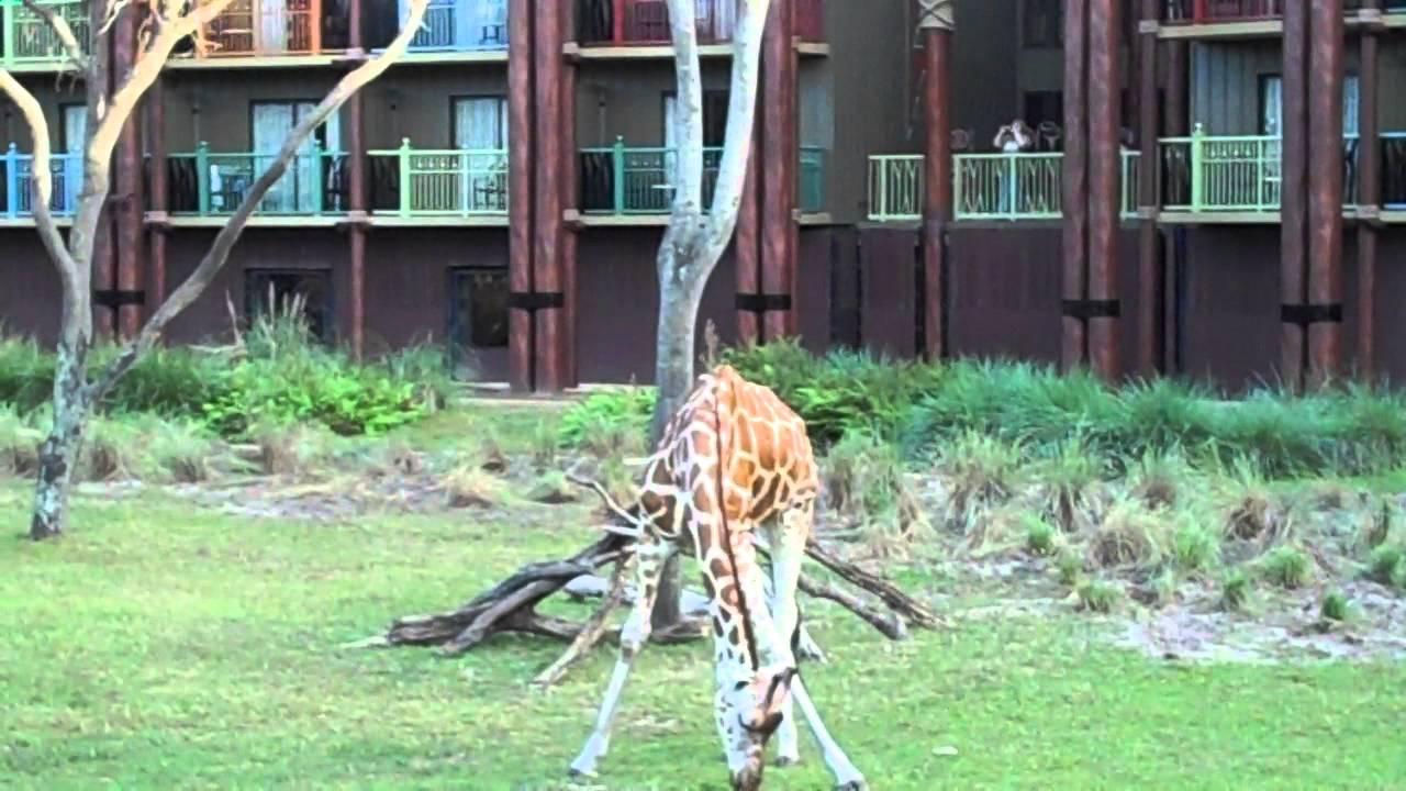 Savannah View Studio From Disney's Animal Kingdom Kidani