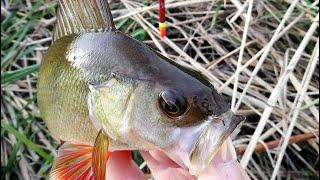 ЭТУ НАСАДКУ ОБОЖАЕТ ОКУНЬ НА НАШЕЙ РЕКЕ Рыбалка на поплавок 2020