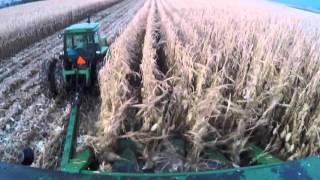 A recap of the 2015 corn crop season on our organic dairy farm
