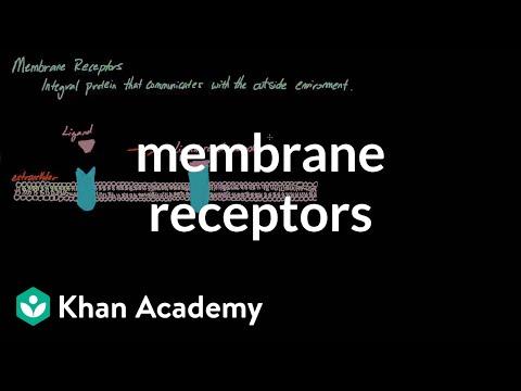 Membrane Receptors | Nervous system physiology | NCLEX-RN | Khan Academy