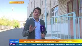 Сибирская язва пришла в РФ: количество заболевших в Дагестане растет