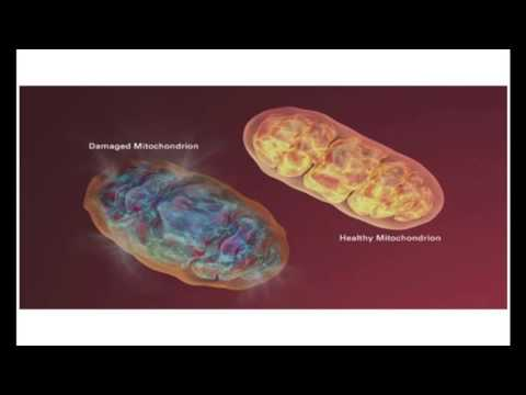 Como optimizar la producción de energía en la célula humana. SACHA BARRIO