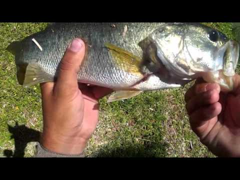 Bass fishing in the city (St. Petersburg florida)