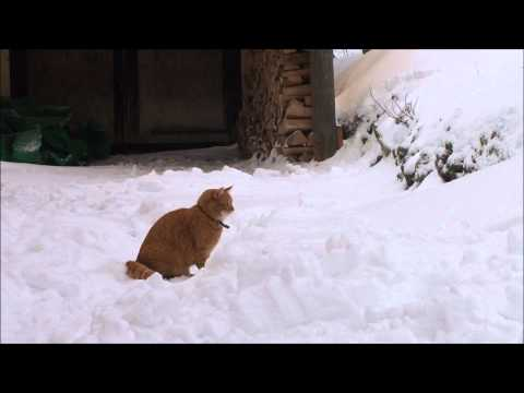 Cat sees snow for the first time