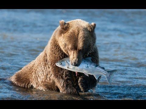 Охота и Рыбалка Белуга 104кг