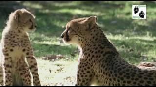 Детский сад для зверят (2 серия) | Документальный фильм про животных