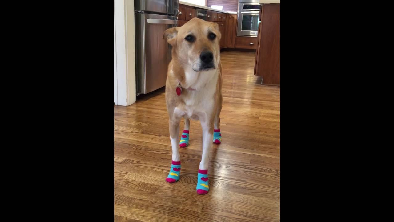 Dog Socks To Protect Wood Floors Floor Matttroy
