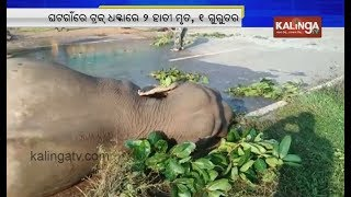 2 Elephants Killed Another Injured After Being Hit By Truck At Keonjharand39s Ghatagaon  Kalinga Tv