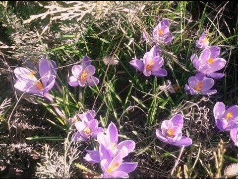 ª∞www.anabelle.kz ª Доставка цветов на дом ГРЭС ª доставка цветов .
