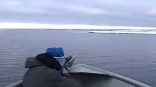 Gambell Alaska, seal hunting.