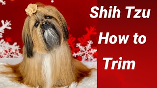 How to Shih Tzu Pet Groom Full Coat