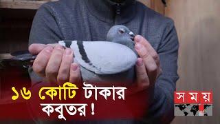 অবিশ্বাস্য দামে সবার চোখ কপালে! | Pigeon Price | Somoy TV