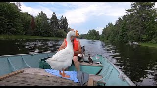 """Boat trip"" part #3 w/ Pet Goose George™"