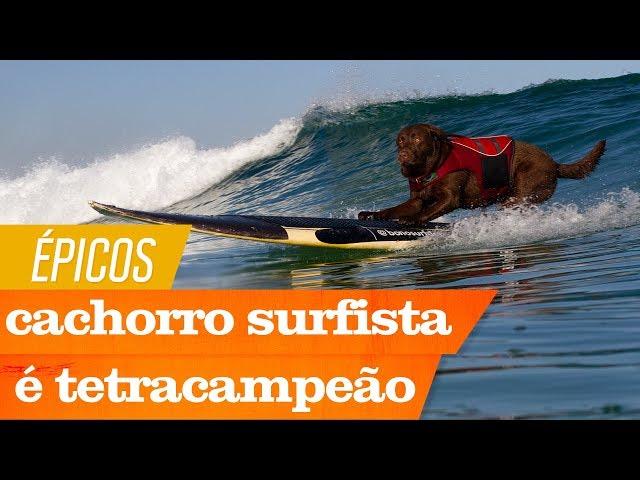 Bono, o cão surfista, é tretracampeão na Califórnia | Épicos | Canal OFF