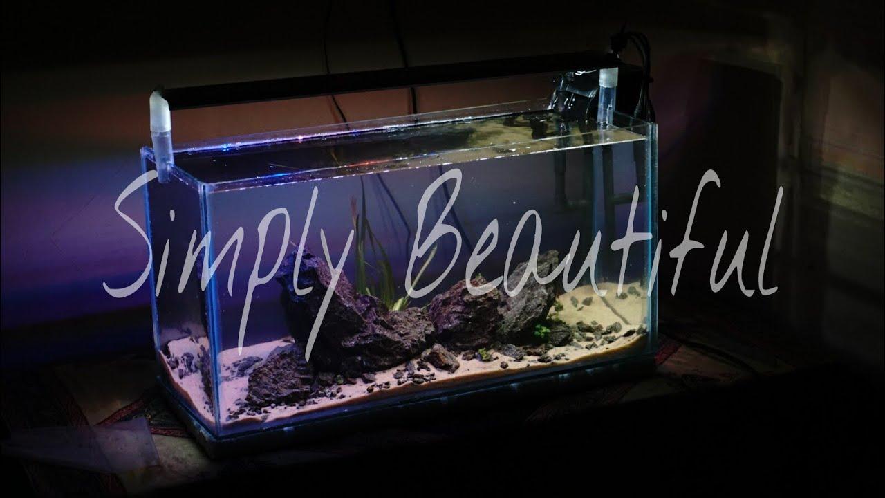 Cara Membuat Aquascape Untuk Pemula | Simple Aquascape ...