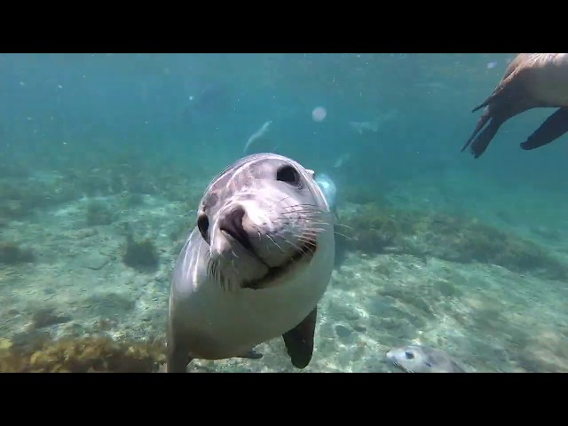Swim with the Sealions 5th March 2019