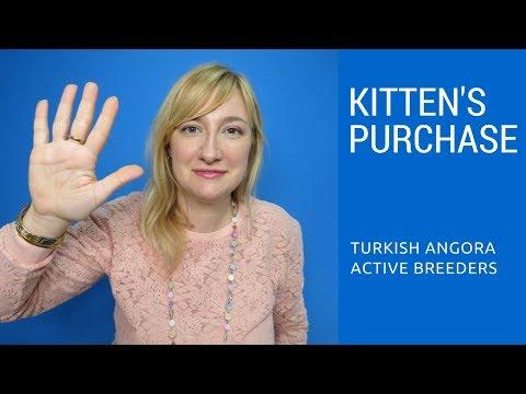 Turkish Angora Kitten's Purchase