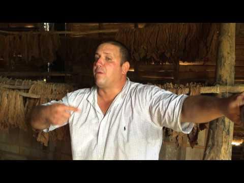 Cuba Osvaldo Tobacco Farm