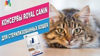 Консервы Royal Canin для стерилизованных кошек   Обзор консерв Royal Canin для стерилизованных котов