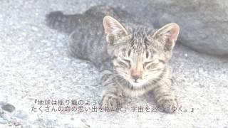 村山早紀先生の「桜風堂ものがたり」有志による宣伝動画です。 紹介動画...