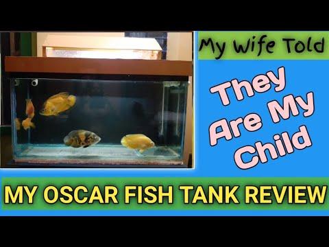 OSCAR FISH TANK REVIEW
