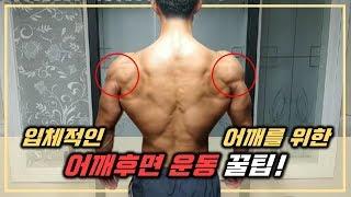 넓은어깨를 위해서는 어깨 후면운동을 해야한다! 초보자도…