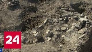 В Крыму нашли скелет усатого кита, пролежавший в земле 10 миллионов лет - Россия 24