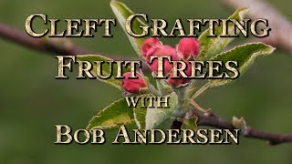 Cleft Grafting Fruit Trees with Bob Andersen
