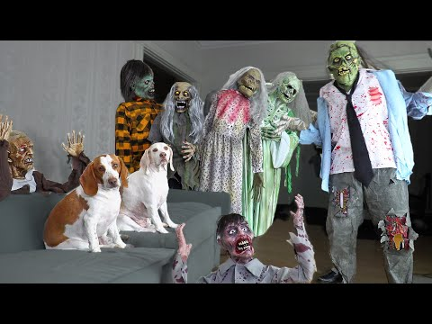 Dog vs Zombie Apocalypse Prank! Funny Dogs Maymo & Potpie Battle Zombies Halloween Pranks