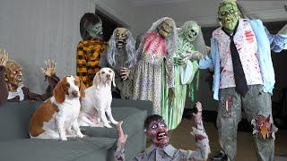 Dog vs Zombie Apocalypse Prank! Funny Dogs Maymo & Potpie Battle Zombies Halloween Pranks