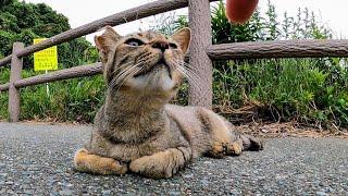 撫でようとすると伸び上がってくる野良猫がカワイイ