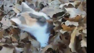 Смешные ролики с животными смотреть