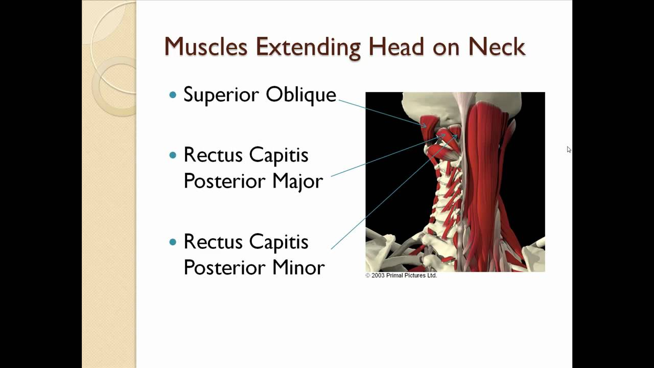 Cervical Spine Muscles Youtube