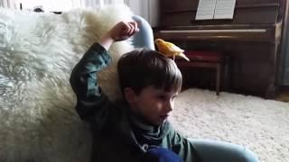 Le canari et l'enfant